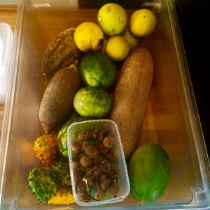 Fruits we foraged in Zimbabwe
