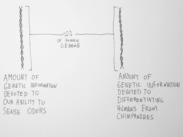 flavor genetics